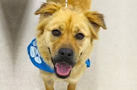 Do Shar Pei Lab Mix Shed by Welcome