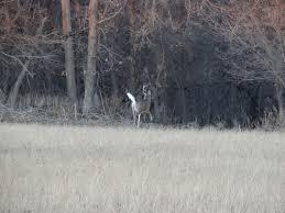 Deer Antler Shed Trap by Work On The Sheds Nebraskaland Magazine