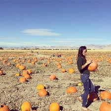 Pumpkin Patch Fort Collins by The 7 Best Corn Maze Pumpkin Patch Combos In Colorado Outthere