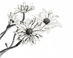 Art Drawing Of Flowers Using A Pen Easy Ideas Google Search