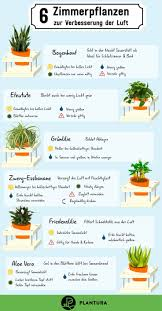luftreinigende pflanzen die top 10 die indoors