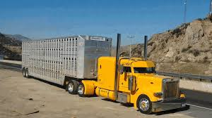 Bull Hauler Left Lane | Yellow Peterbilt Bullboys | Bull Haulers ... Semi Hauling Cattle Overturns On I15 Smashing Onto Car With 3 The Worlds Most Recently Posted Photos Of Hauler And Livestock These Are People Who Haul Our Food Across America Salt Npr No 11 Jbs Carriers Beef Central Kenworth Custom W900l Bull Bad Ass Semi Pinterest Blhauler Manners Brigshots Best Photos Flickr Hive Mind Mf Western Toy Kids Bull Hauler Truck Peterbilt Child 2 Pk 10 Top Paying Driving Specialties For Commercial Drivers Norstar Beds Iron Trailers Livestock Groups Seek Waiver From Trucking Rules Feedstuffs Cattle Pots Home Facebook
