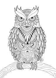 Mr Owl By Miedzy Kreskami