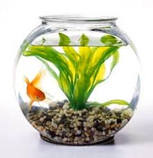 aquarium poisson prix prix aquarium poisson naturel