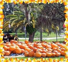 Pumpkin Patch Denver Pa by Pumpkin Patch In Spring Hill Florida Get Them While They Last