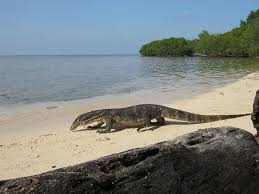 Have You Heard Of The Komodo Island Where Gigantic Lizards Surviving Descendents Dinosaurs Roam Free