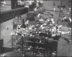 100 Pigeon Coop Plans Up On The Roof The Revered Reviled City Museum Of
