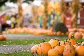 Pumpkin Festival 5k Milford Nh by 8 Fall Harvest Festivals Across The Usa En Route Us News