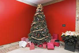 Canaan Fir Christmas Tree Needle Retention by How To Make Your Fresh Cut Christmas Tree Last Chicago Tribune