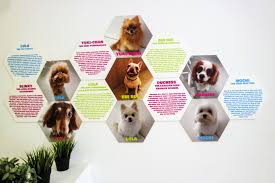 Shed Free Lap Dogs by We U0027re The Furballs Dog Cafe Bugis A Deecoded Life