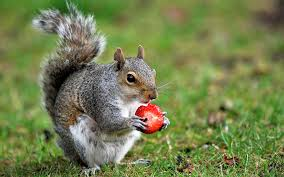 a guide to what squirrels eat the garden