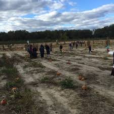 Pumpkin Picking In Freehold Nj by Giamarese Farm 75 Photos U0026 33 Reviews Farmers Market 155
