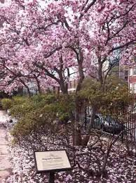 Magnolia Garden Independence National Historical Park U S