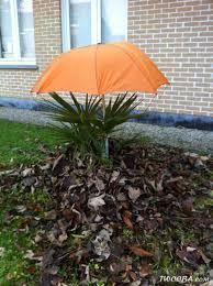 comment protéger mon palmier en hiver la palmeraie fr