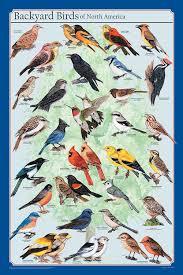 Frey Scientific Backyard Birds Of North America Poster, 36