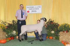 Miller Christmas Tree Farm Ct by 2016 Sheep Show Photos Week 1