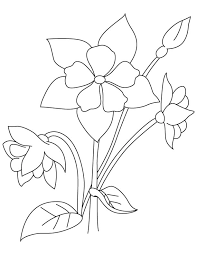 Columbine Perennial Coloring Page