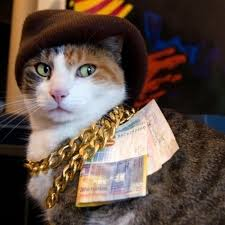 thug cat 21 animals living the thug totally nailed it