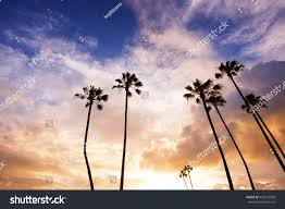 Palm Trees In California Beach During Sunset