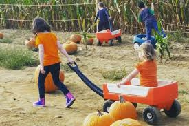 Pumpkin Picking In Freehold Nj by Best Nj Pumpkin Patches Hayrides Corn Mazes For 2017