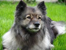 Top 10 Dogs That Dont Shed by What Kind Of Dog Should We Get Dog Breeds For Kids Familyeducation