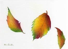 Leaves Drawing Three Leaves by Jane Samuelson