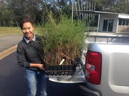 100 Seedling Truck Exciting News Today Thita Picked Up Her Melaleuca Irbyana And
