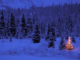 Tannenbaum Christmas Tree Farm Michigan by 45 Minutes Relaxing Christmas Compilation Ii Youtube
