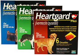 heartgard for cats heartgard plus