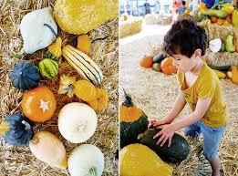 Peter Pumpkin Patch Petaluma by Happy Weekend Pumpkin Patching In Petaluma U2014 Good On Paper