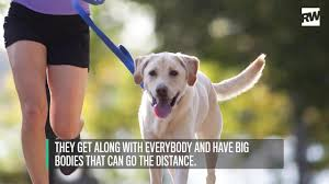 Non Shedding Dogs Large by The Best Types Of Dogs For Runners Runner U0027s World