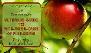 Pumpkin Picking Places In South Jersey by The Complete Guide To Apple Picking In New Jersey 2017 Things