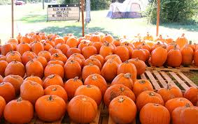 Pumpkin Patch Church Tallahassee by 2015 In Photos October And November Northescambia Com