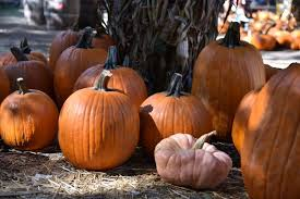 Pumpkin Patch Pasadena Area by 5 Things To Do At The Irvine Park Railroad Pumpkin Patch Oc Mom Blog