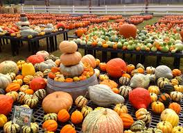 Myers Pumpkin Patch Facebook by Corn Mazes And Pumpkin Patches Virginia Is For Lovers