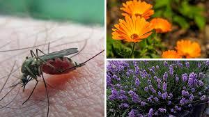 schutz vor stichen was wirklich gegen stechmücken hilft