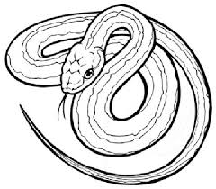 Download Snake Coloring Pages 6