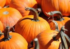 Grims Greenhouse Pumpkin Patch by Themorningcall Com Lehigh Valley Parenting Blog