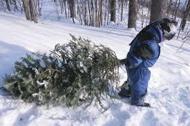 Waste Management Christmas Tree Pickup Mn by Christmas Trees City Of Orono Minnesota