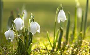 blooming marvellous the bulbs to plant now