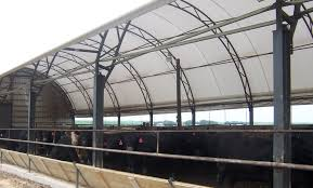 Hoop Barns Protect Cattle From Heat | Iowa Public Radio New Technologies Available For Cowcalf Producers Hoop Barns Protect Cattle From Heat Iowa Public Radio Chip Shot Cstruction Best 25 Pole Barn Cstruction Ideas On Pinterest Building Barn Consider Deep Pack Cow Comfort And Manure Management 13 Frugal Diy Greenhouse Plans Remodeling Expense Barndominium Prices Day 6 Orazi Feedlot Pork Producer 22 Greenhouses With Great Tutorials Diy Greenhouse
