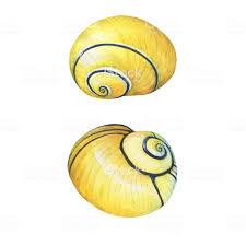 100 Sea Shell Design Illustrations Of S Marine Hand Drawn Watercolor