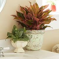 Small Plants For The Bathroom by Grow Trendy Bathroom Plants Costa Farms