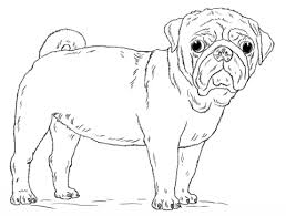 Cute Pug Dog Coloring Page