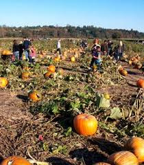 Roloffs Pumpkin Patch In Hillsboro Or by Best 25 Pumpkin Patch Seattle Ideas On Pinterest Pumpkin