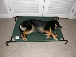 coolaroo dog bed coolaroo xl dog bed outdoor dog bed elevated