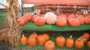 Columbus Ohio Pumpkin Patches by Schacht Farm Market Pumpkin Patch Ohio Haunted Houses