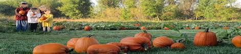 Pumpkin Patches Mankato Mn center creek orchard