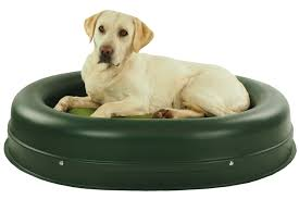 Chew Proof Dog Beds by Tips Comfy Chew Proof Dog Bed For Comfortable Pet Bed Ideas Dog