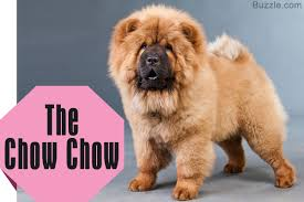 Dogs That Dont Shed Their Fur by 100 Large Dogs That Dont Shed Hair 5 Tips To Find The Right